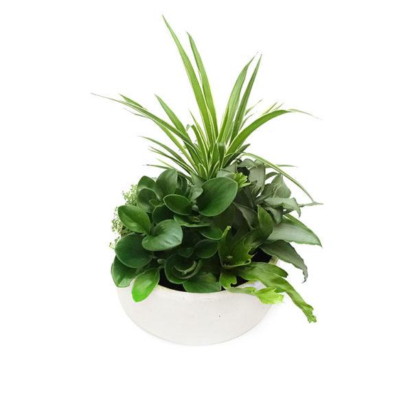 Medium Indoor Plant Bowl