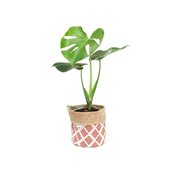 Monstera Deliciosa Planter Bag Red