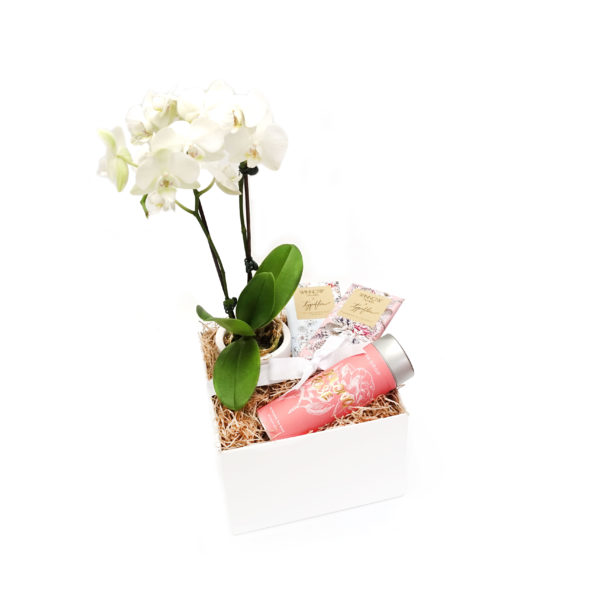 Orchid Living Gift Set Chocolate Winnow