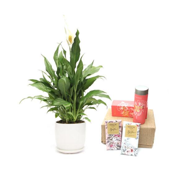 Peace Lily Gift Set Chocolate Tea