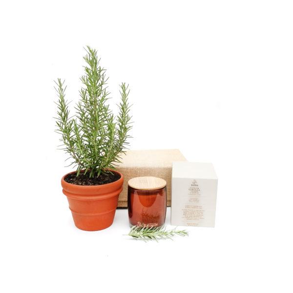 Rosemary Terracotta Gift Set