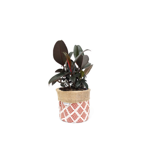 Rubber Plant Ficus Planter Bag Red