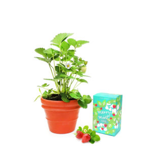 Strawberry Terracotta Gift Set Iced Tea