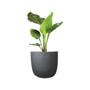 Strelitzia Bird of Paradise Granite Egg Pot