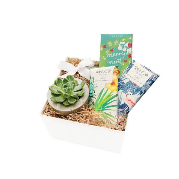 Succulent Living Gift Set Chocolate Winnow