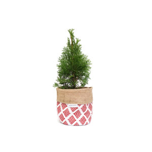 Thuja Occidentalis Conifer Planter Bag-Red