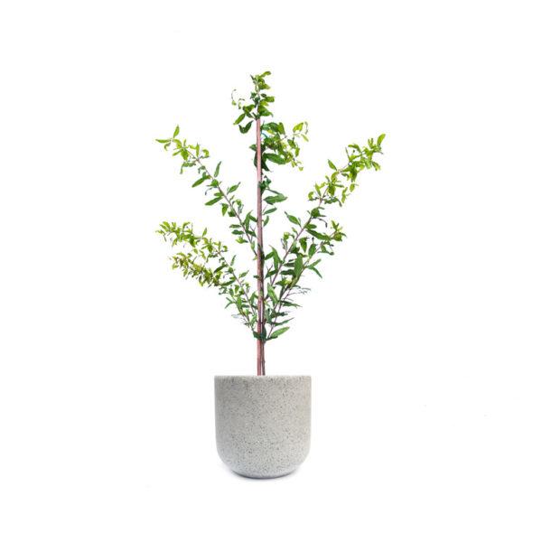 Pomegranate Grey Terrazzo