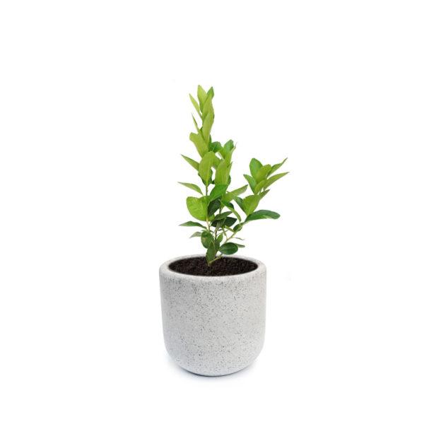 Lemon Tree Grey Terrazzo